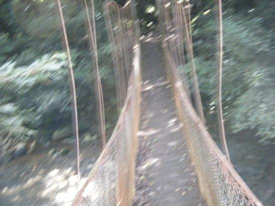 Hotel Bosque del Mar Playa Hermosa: hanging bridge at Rincon