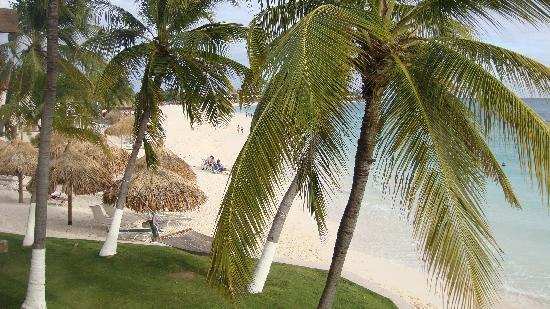 Divi Aruba All Inclusive: Vista habitacion 1 Piso
