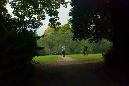Royal Victoria Park: Glimpses through the trees