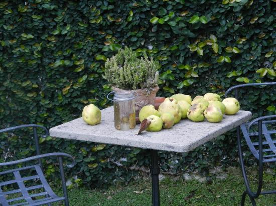 Country Rome Bed & Breakfast: we enjoyed pears from their trees for breakfast!