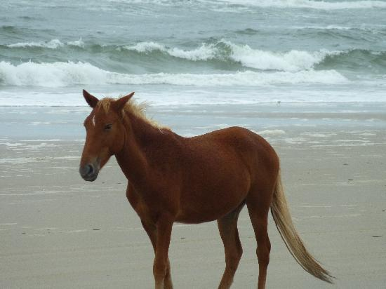 Wild Horse Adventure Tours: Afternoon stroll on the beach