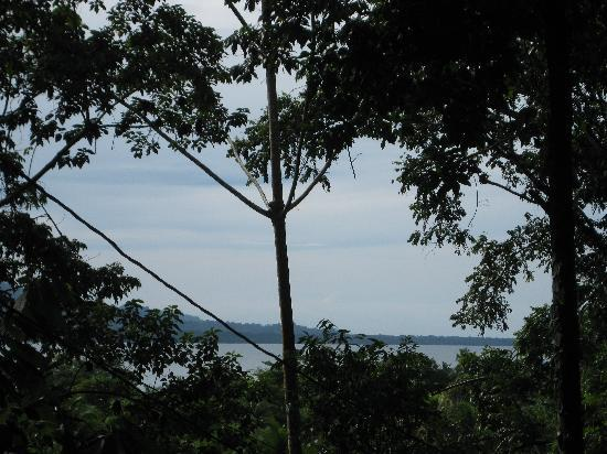 Cashew Hill Jungle Cottages: View from the gates of the grounds, that's the Carribean ocean!