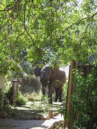 Dulini River Lodge: An elephant in the camp
