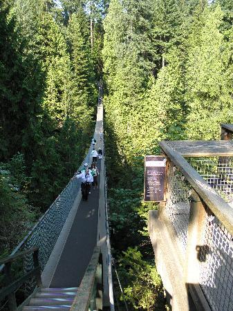 อุทยานและสะพานแขวนคาปิลาโน: 400 feet to the river.