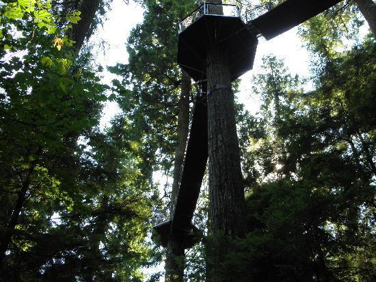 อุทยานและสะพานแขวนคาปิลาโน: Tree Top Walk