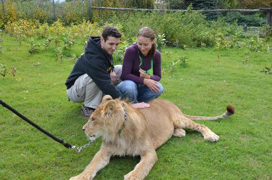 Jungle Cat World Wildlife Park: private meeting with a 14 months old lion