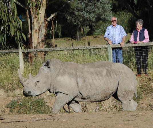 ดับโบ, ออสเตรเลีย: Taronga Western Plains Zoo