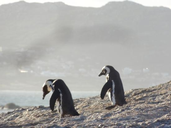 "Boulders Beach: Photo from ""no fee"" walk"
