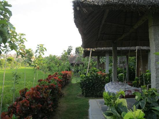 Shanthi Guesthouse: swing and cottage