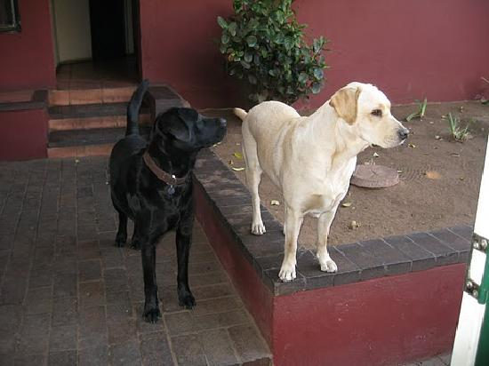 Diamond Diggers Backpackers: dogs