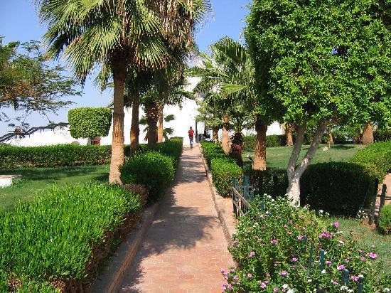 Halomy Hotel: Halomy - garden area