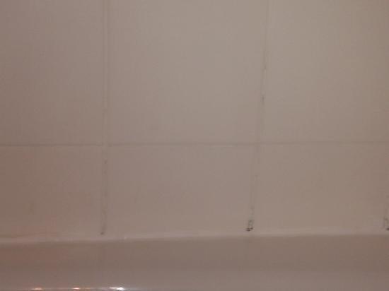 Hilton San Diego/Del Mar: Black mold on bathroom tiles