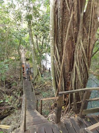 Estancia Mimosa Ecoturismo: trail