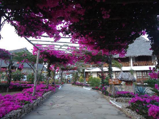 Jacaranda Beach Resort: i fiori