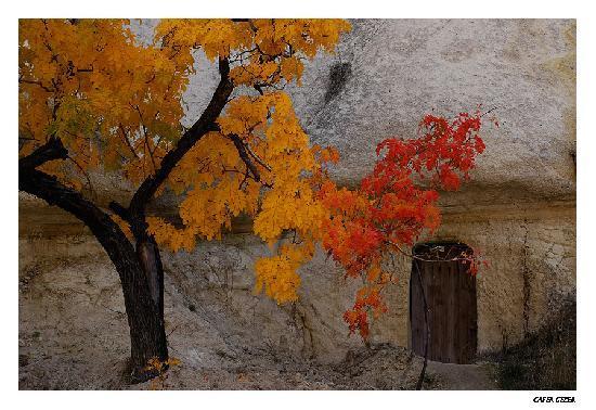 Acetes Travel Daily Tours: autumn