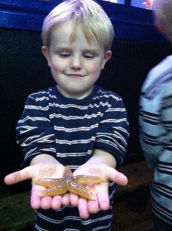 Lyme Regis Marine Aquarium: Hands on entertainment if you're gentle