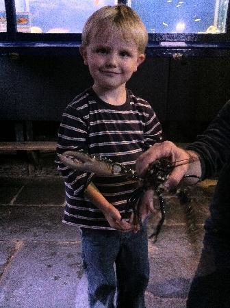 Lyme Regis Marine Aquarium: And here's another snap-shot (lobster - geddit?