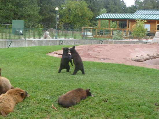 Bear Country USA: bears