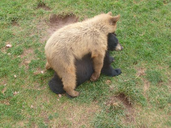 Bear Country USA: baby bears