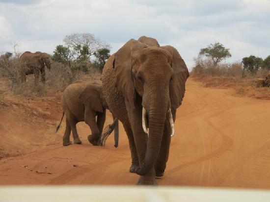 Safari Kenya Watamu - Day Tours: Elefanti