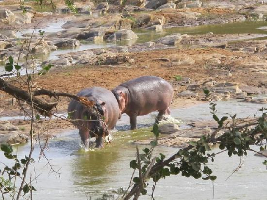 Safari Kenya Watamu - Day Tours: Hippo