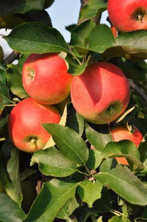 Gasthof Zum Kirchenwirt: Herbst im Apfelland 3
