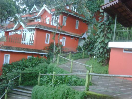 Tea Valley Resort: Walkway