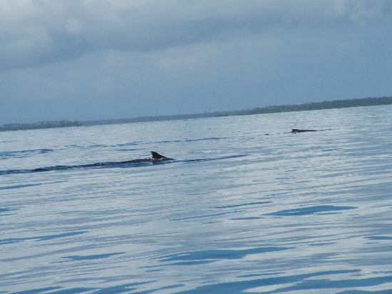 Deep Blue Diving: mum and baby whale x