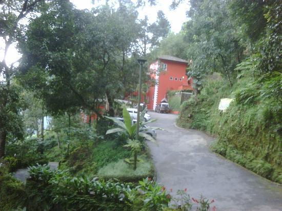 Tea Valley Resort: Entrance path