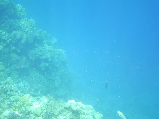 SuneoClub Reef Marsa: House reef