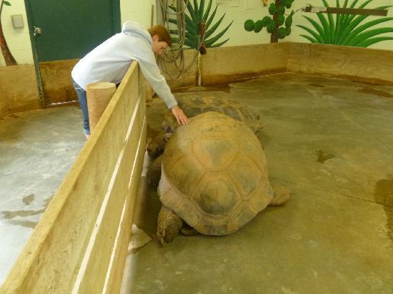 Reptile Gardens: turtles