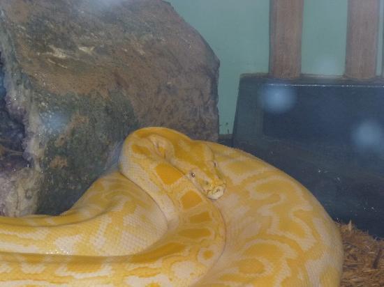 Reptile Gardens: snake