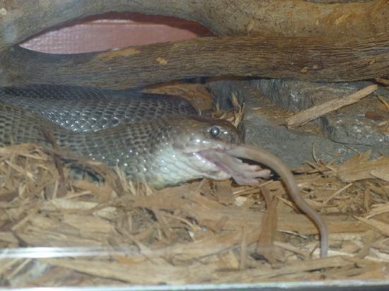 Reptile Gardens: animal