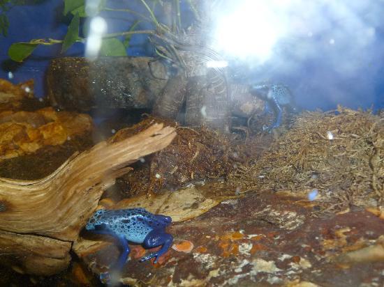Reptile Gardens: frog