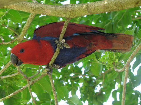 Taiwan Thumb-up B&B: One of Kuni's parrots