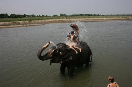 Unique Wild Resort: elephant bathing