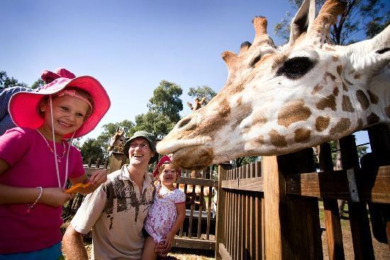 ดับโบ, ออสเตรเลีย: provided by: Visit Dubbo