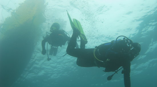 Austral Divers: Buceo Quintay