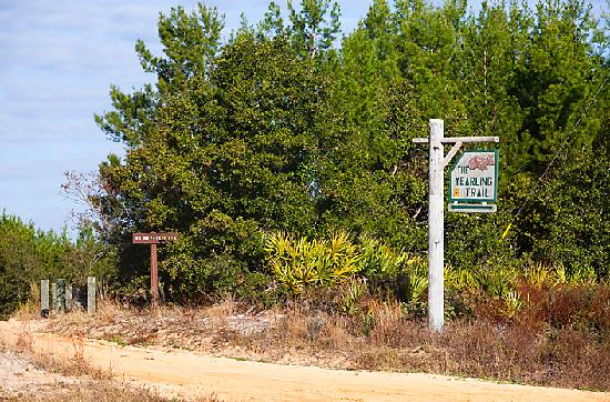 Holiday Inn Express Suites Ocala - Silver Springs: The Yearling Trail at Ocala National Forest (few minutes from hotel)