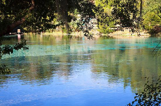 Holiday Inn Express Suites Ocala - Silver Springs: Silver Glen Springs at Ocala National Forest (few minutes from hotel)