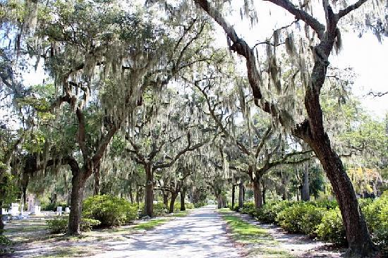 Bonaventure Cemetery: Live Oaks