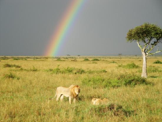 Mpata Safari Club: 大地・虹・ライオン