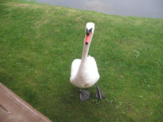 Dacre Lakeside Park: Early morning visitor ..x
