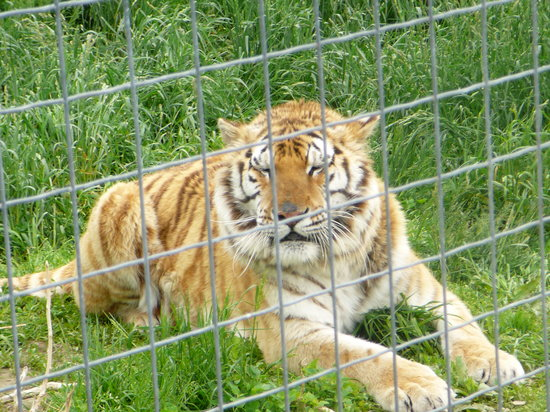 Rock Springs Wisconsin Big Cat Rescue