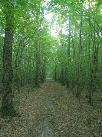 Les Bois d'Esves: Ballade dans les bois