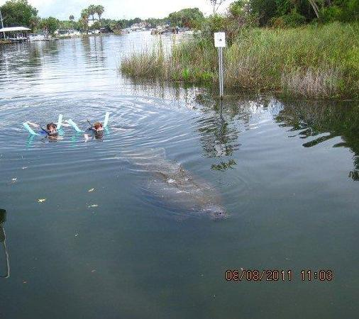 Manatees In Paradise: Roby e Laure + manatee