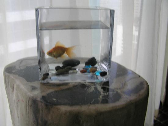 Kimpton EPIC Hotel: Goldfish included in room!
