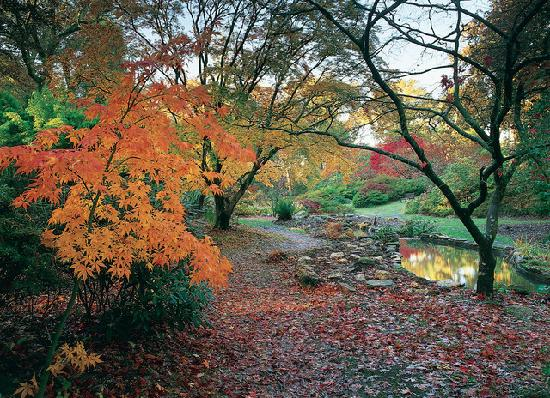 Exbury Gardens & Steam Railway: Exbury has been listed in the Top 10 places to see autumn colour in the country