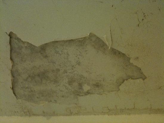 Adagio Monaco Palais Josephine Aparthotel: Bathroom ceiling