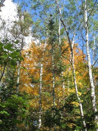 Ellison Bay, Wisconsin: Beautiful Trails